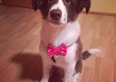 Bruno is a cute little troublemaker!