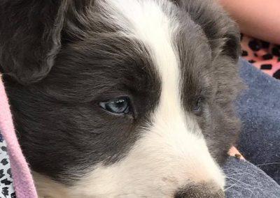 Meet Cosmo
