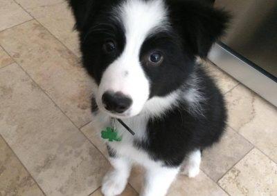 Meet Floki!
