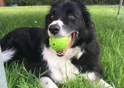Jess the Border Collie