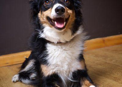 Meet Macey the Border Collie