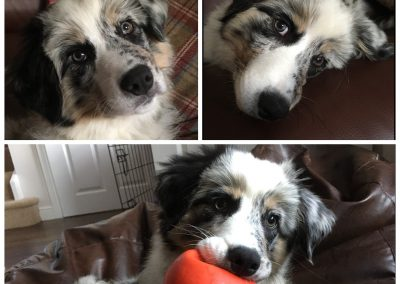 Meet Brodee!