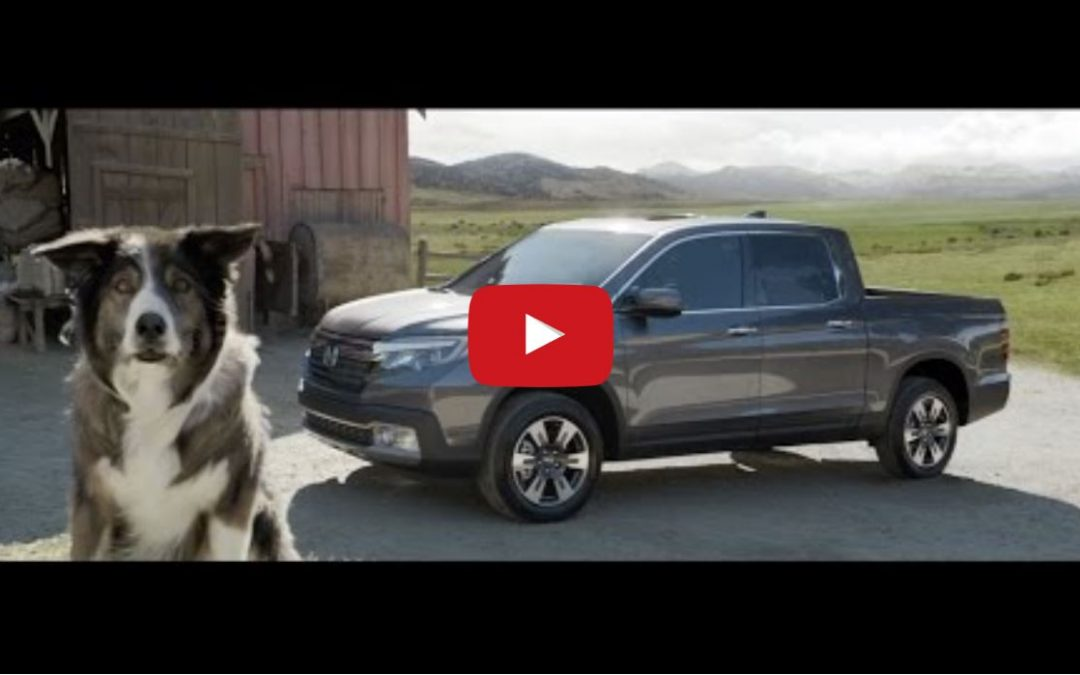Must Watch Honda Commercial Featuring a Border Collie