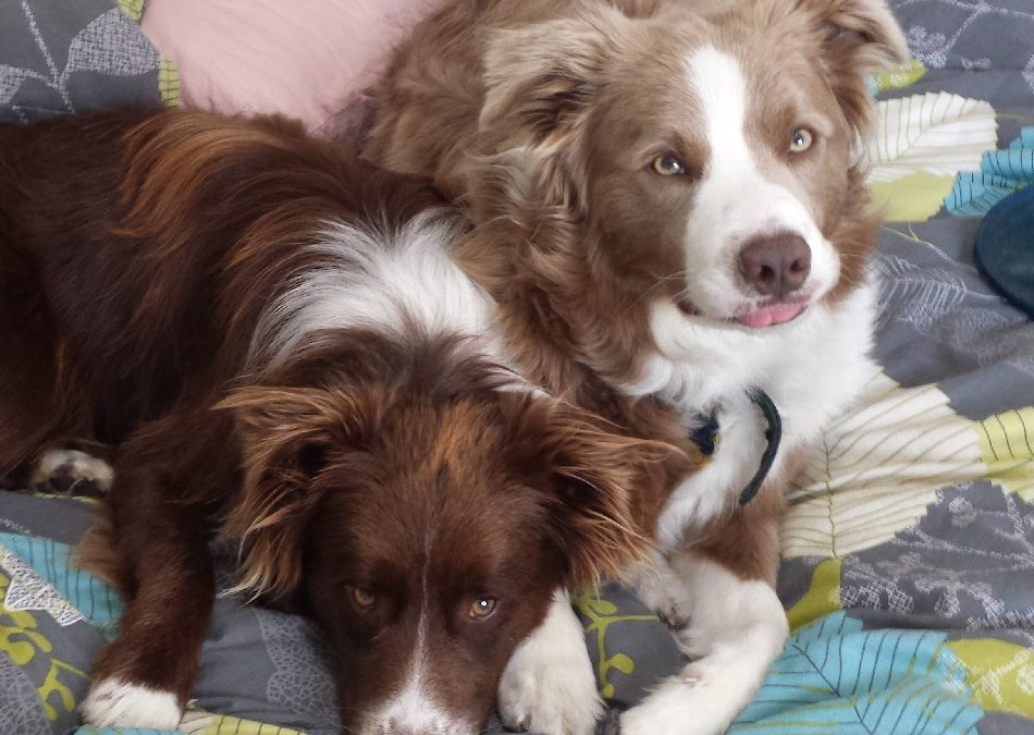 Meet Mack and Milo from New Zealand!