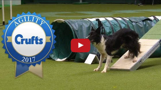 A Must Watch! Crufts 2017 Agility Championship Final