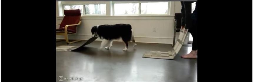 Doga Excercise
