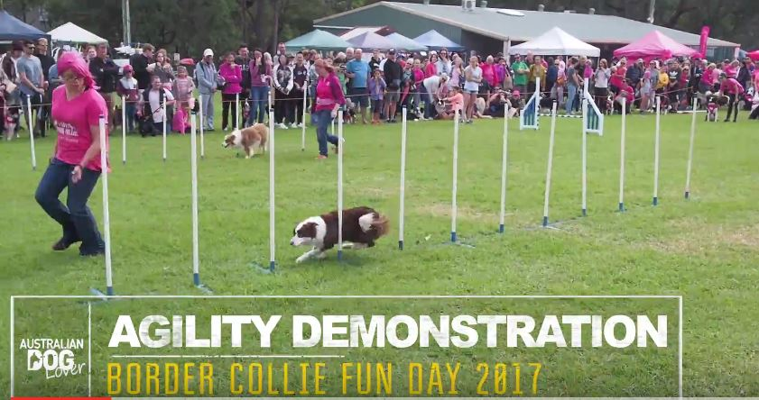 Border Collie Fun Day 2017