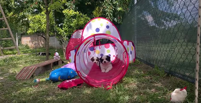 The Hyperpaw Kennel
