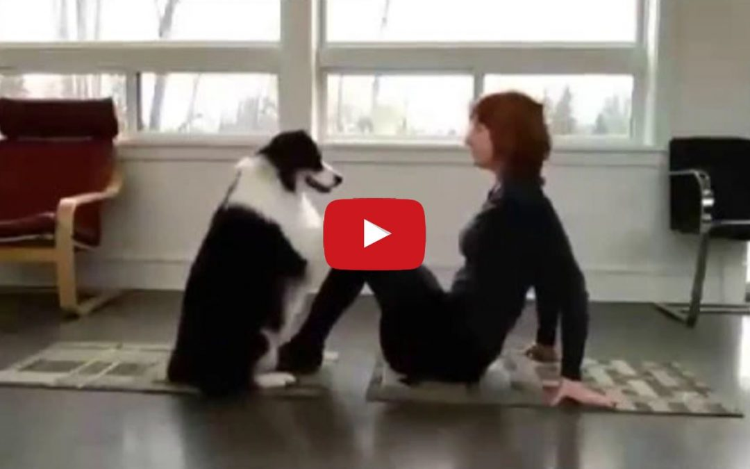 Border Collies Make Great Exercise Companions!