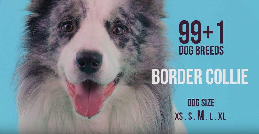 99+1 Dog Breeds features Border Collie