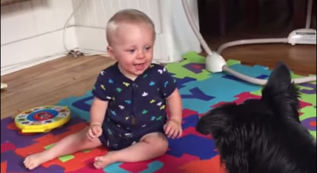 Border Collie Playing with Baby