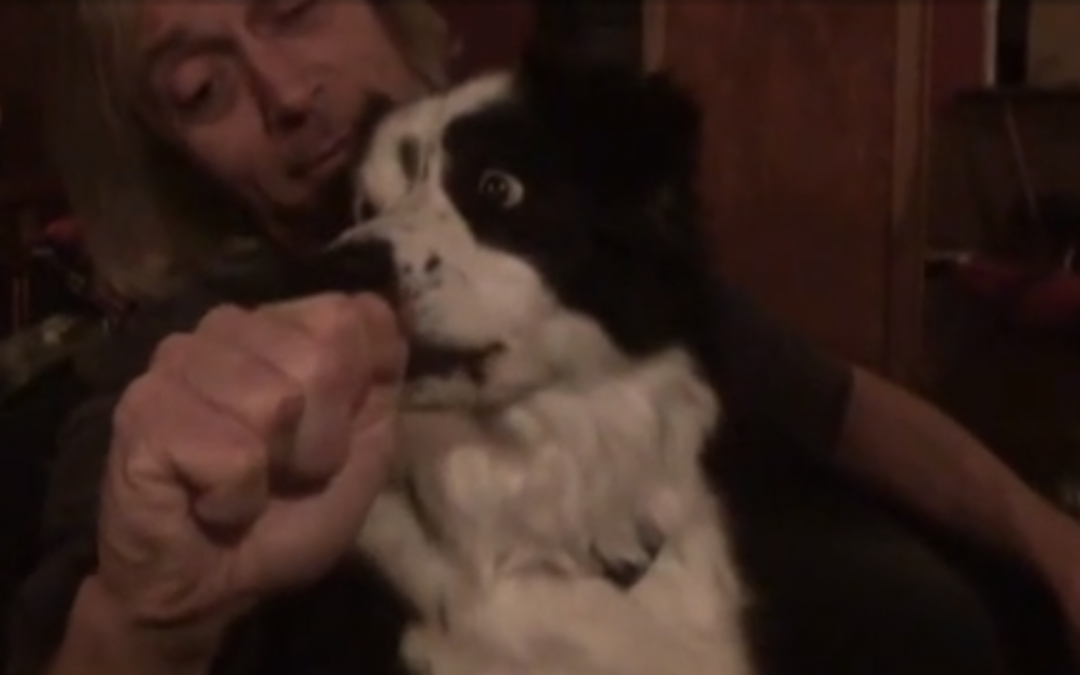 "Watch This Border Collie's Funny Reaction To Her ""Nose Getting Stolen"""