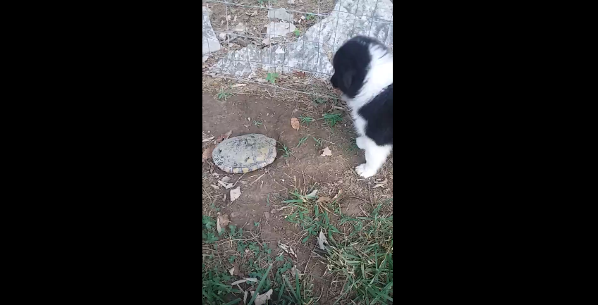 Puppy and Turtle