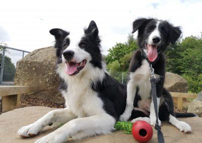 Meet Alfie & Buddy!