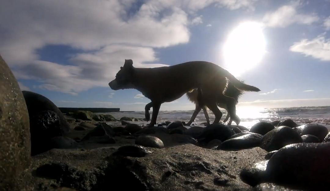 Beach GoPro Video