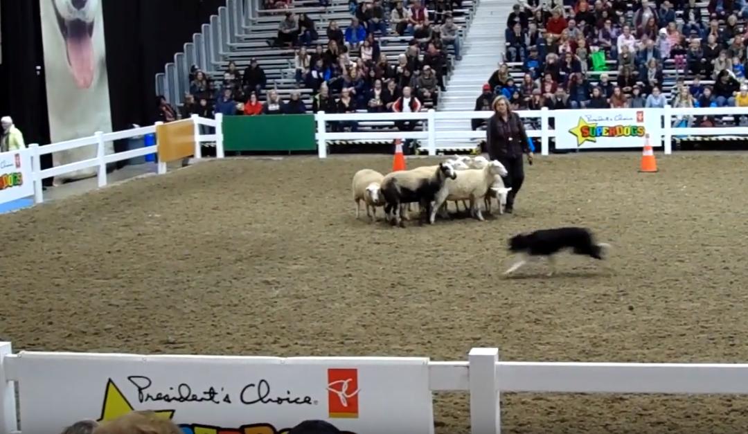 Herding Demo