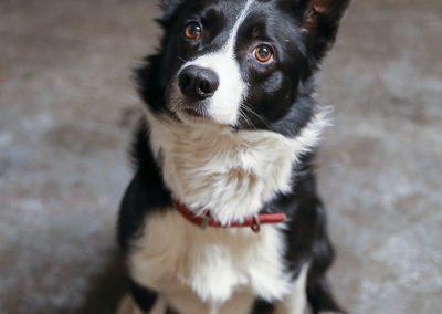 Meet Hugo from Dundee