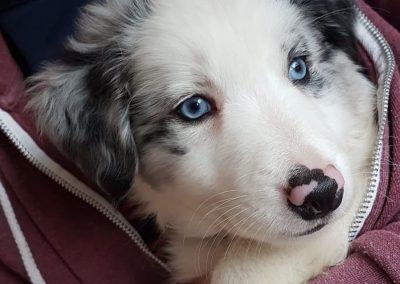 Meet Lola!