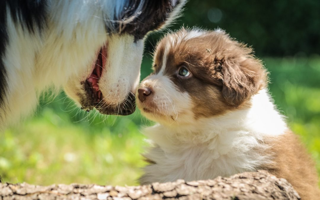 20 Popular Names for Border Collies