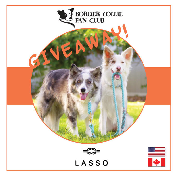 Lasso Giveaway