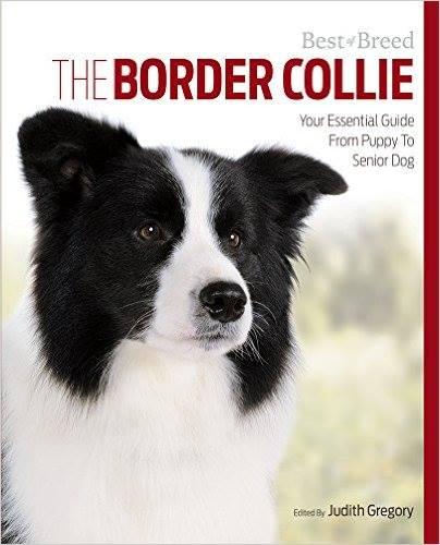 Border collie guide book