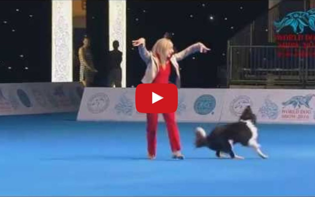 Alice the Border Collie Wins the Freestyle Event at the 2016 FCI Dog Dance World Championship