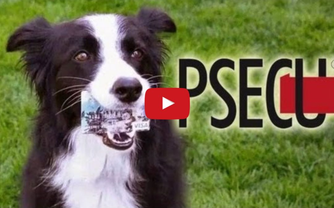 Nana the Border Collie Does All Sorts of Tricks In This Great Visa Commercial!