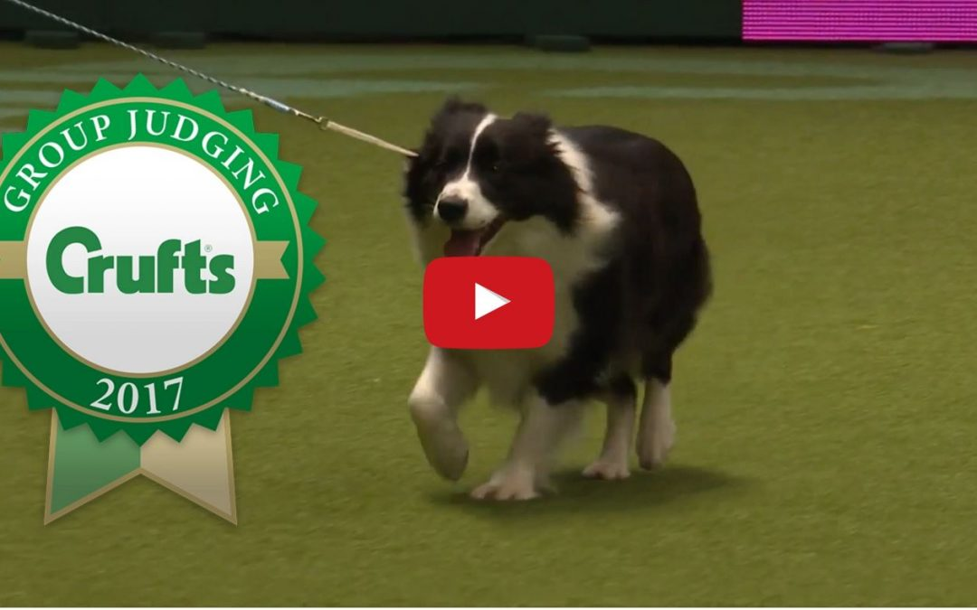 Check Out Crufts 2017 Pastoral Group Judging and Presentation!