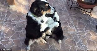 These Border Collies Hugging Each Other Out is the Cutest Thing You'll See Today