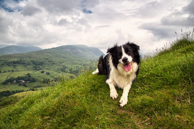 11 Cool Facts about Border Collies