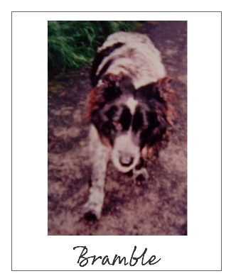 Bramble the Vegan Dog Lives to 189 Years