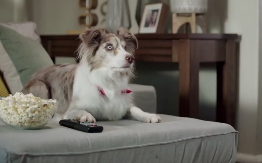 Australian Border Collie Stars in Keeping Up With the Freemans Commercial