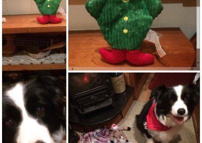 border collie elf on the shelf