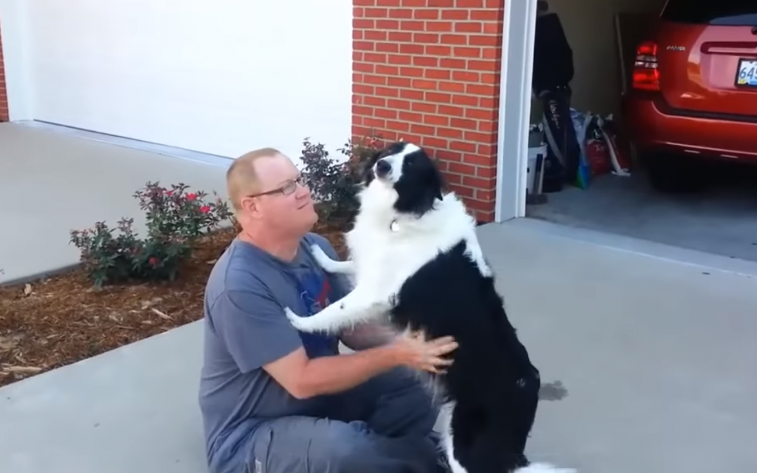 A Few of the Best Border Collie Videos from 2017