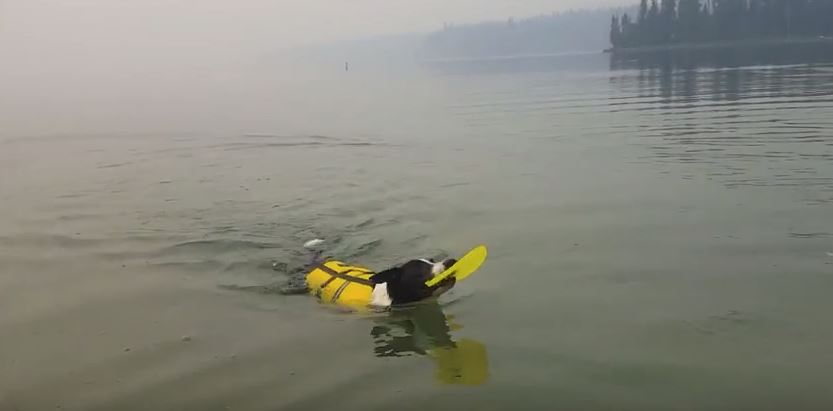Elliot Learns To Swim