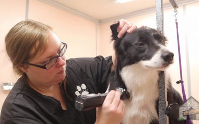 BorderCollieFC's Best Tips for Grooming Your Border Collie