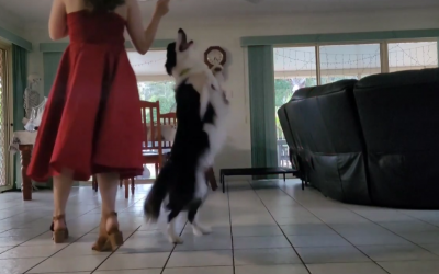 Adorable Border Collie Frankie Dances With Her Mom!
